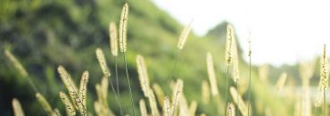 cropped-cropped-grass-1209588_960_720.jpg